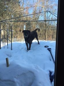 Handsomel on snowpile